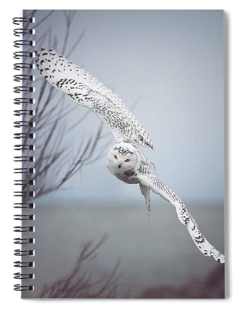 Wildlife Spiral Notebook featuring the photograph Snowy Owl In Flight by Carrie Ann Grippo-Pike