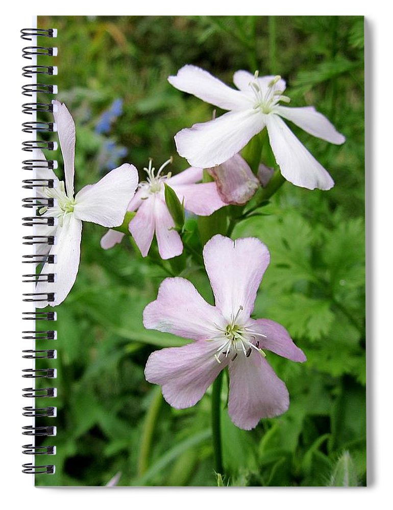 Herb Spiral Notebook featuring the photograph Soapwort Flowers by MTBobbins Photography