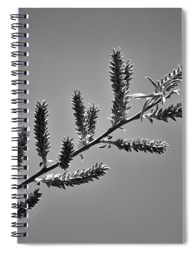 Spring Spiral Notebook featuring the photograph Spring buds by Lisa Kane