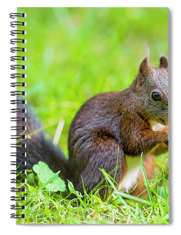 Nut Spiral Notebook featuring the photograph Squirrel Eating A Nut In The Grass by Picture By Tambako The Jaguar