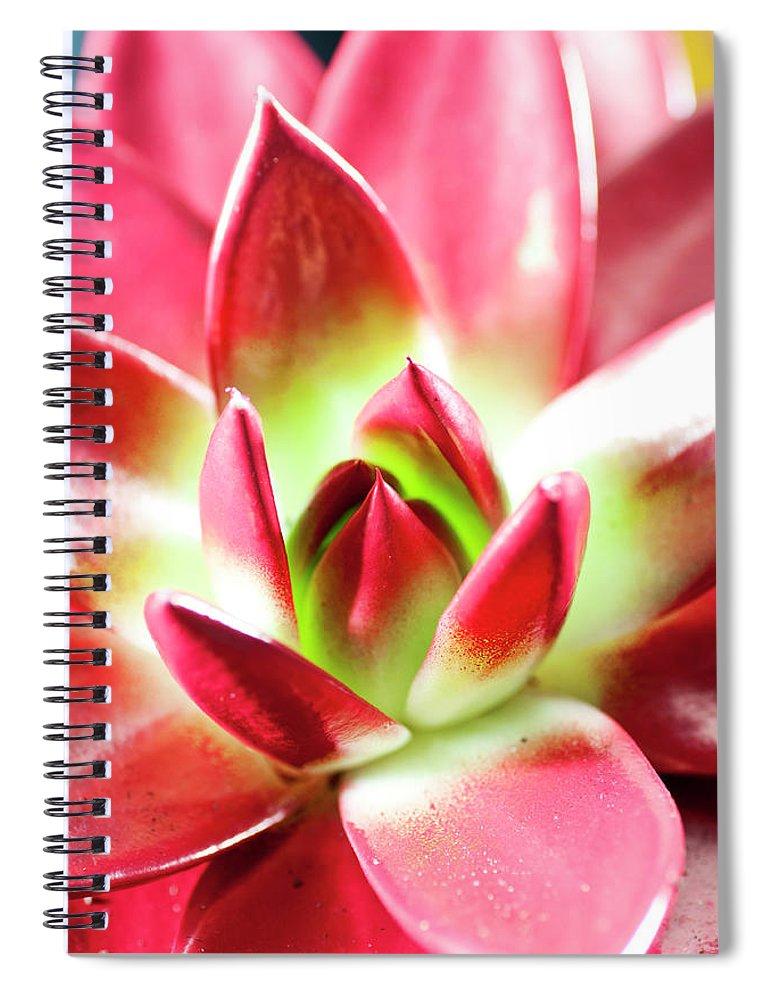 Cut Out Spiral Notebook featuring the photograph Succulent Echeveria by Lrescigno