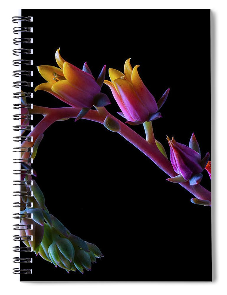 California Spiral Notebook featuring the photograph Succulent Flowers On A Stalk by Bill Gracey