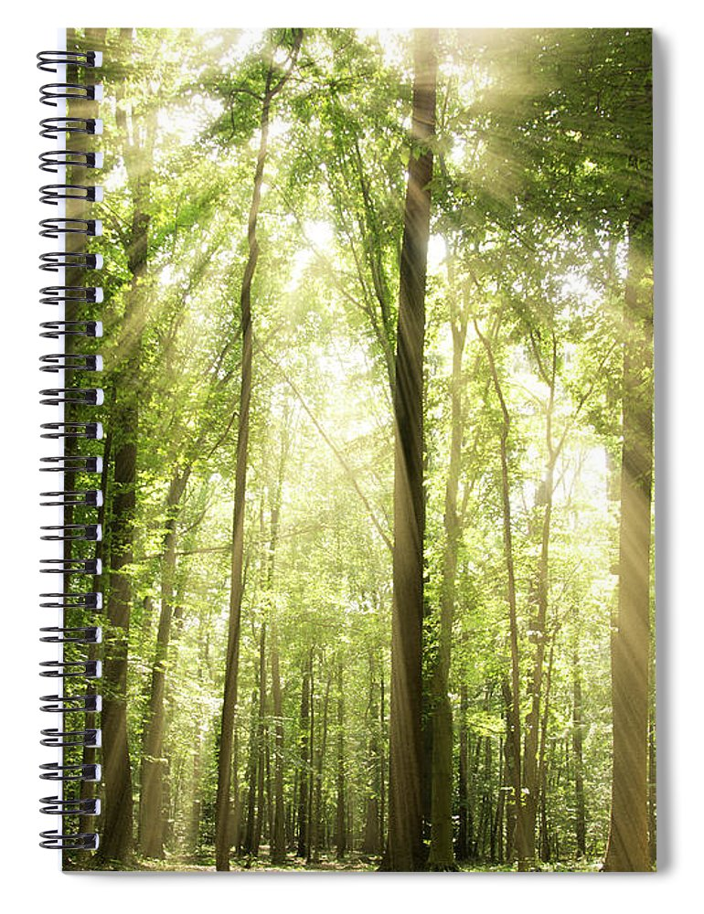 Tranquility Spiral Notebook featuring the photograph Sunrays Through Treetops by Melissa Fague