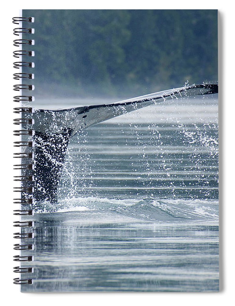 One Animal Spiral Notebook featuring the photograph Tail Of Humpback Whale by Grant Faint