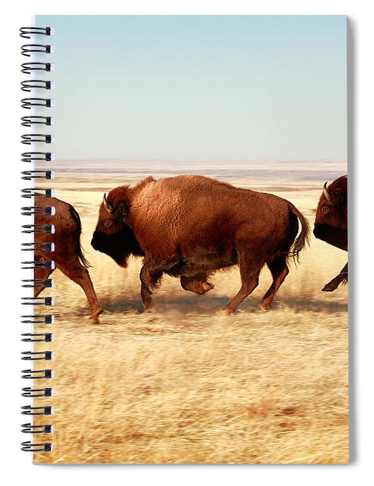 Buffalo Spiral Notebook featuring the photograph Tatanka by Todd Klassy