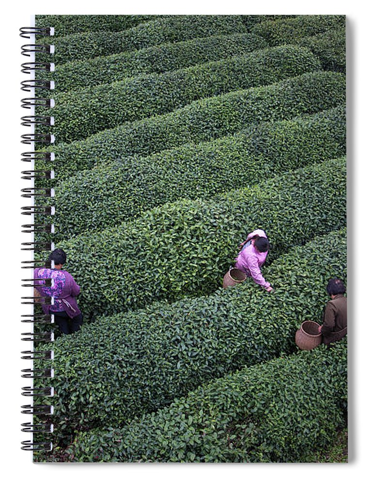 Working Spiral Notebook featuring the photograph Tea Pluckers Picking Tea Leaves In by Xia Yuan