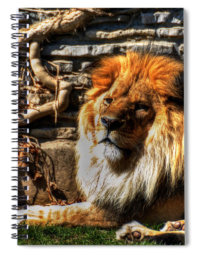 Lion Spiral Notebook featuring the photograph The King Lazy Boy At The Buffalo Zoo by Michael Frank Jr