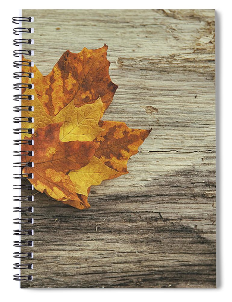 Maple Leaf Spiral Notebook featuring the photograph Three Leaves by Scott Norris