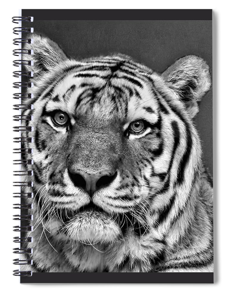 1b90ce6c3 Tiger Portrait - Black And White Spiral Notebook for Sale by Nikolyn  McDonald