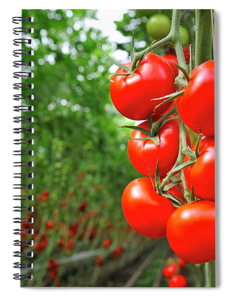 Agricultural Building Spiral Notebook featuring the photograph Tomato Greenhouse by Sjo