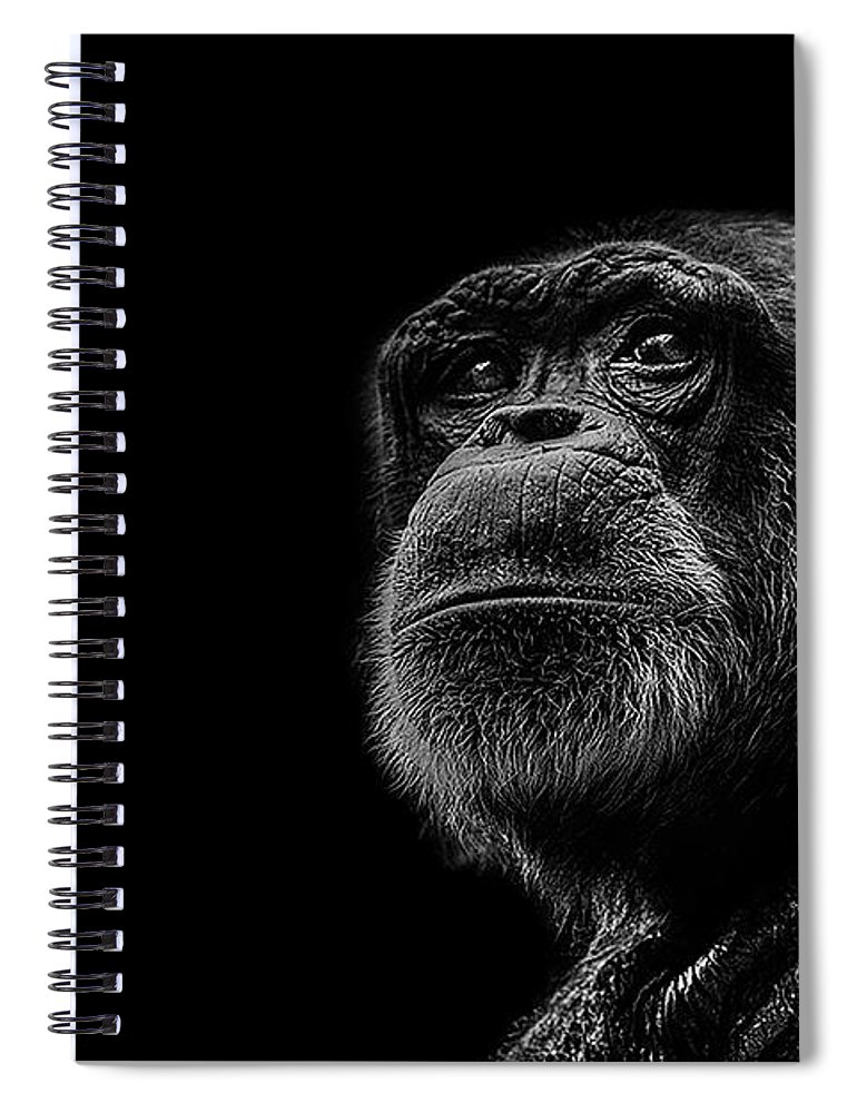 Chimpanzee Spiral Notebook featuring the photograph Trepidation by Paul Neville