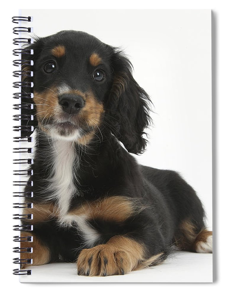 cocker spaniel tricolor tricolor working cocker spaniel puppy spiral notebook for 1108