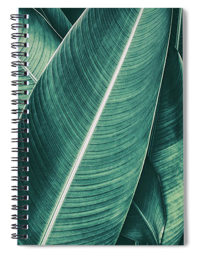 Spa Spiral Notebook featuring the photograph Tropical Palm Leaf, Dark Green Toned by Pernsanitfoto