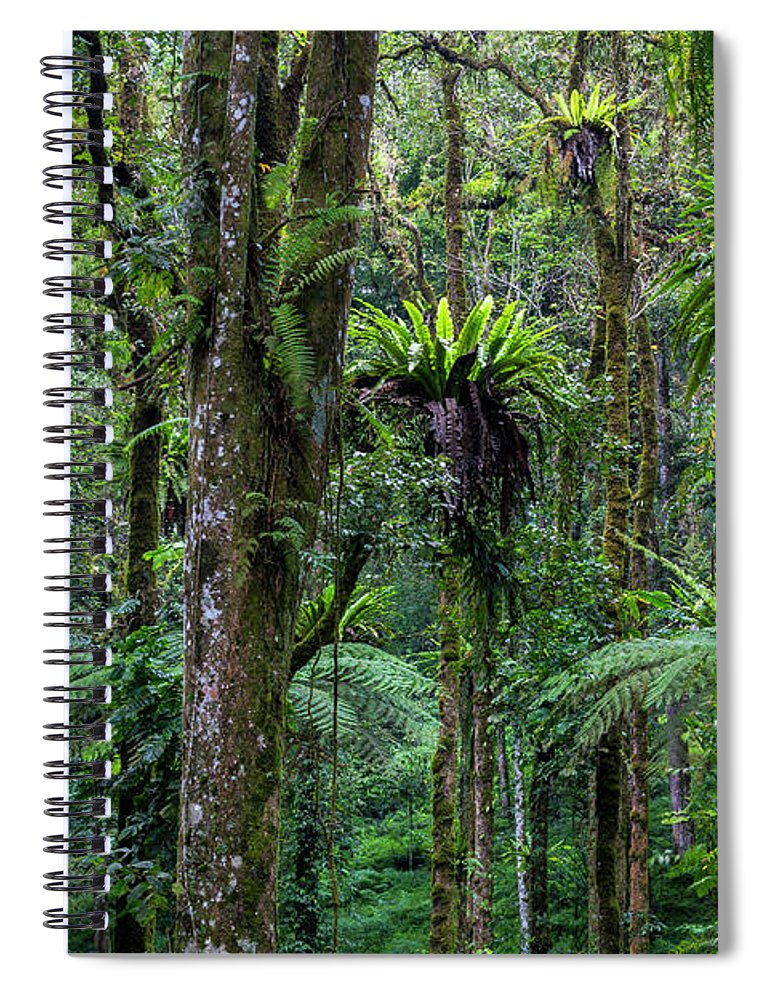 Tropical Rainforest Spiral Notebook featuring the photograph Tropical Rain Forest by Gavriel Jecan