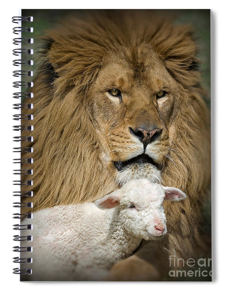 Lion And Lamb Spiral Notebook featuring the photograph True Companions by Wildlife Fine Art