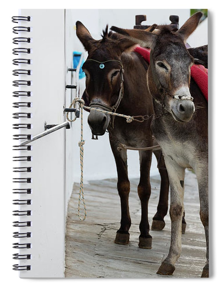 Working Animal Spiral Notebook featuring the photograph Two Donkeys Tethered In The Street In by Martin Child