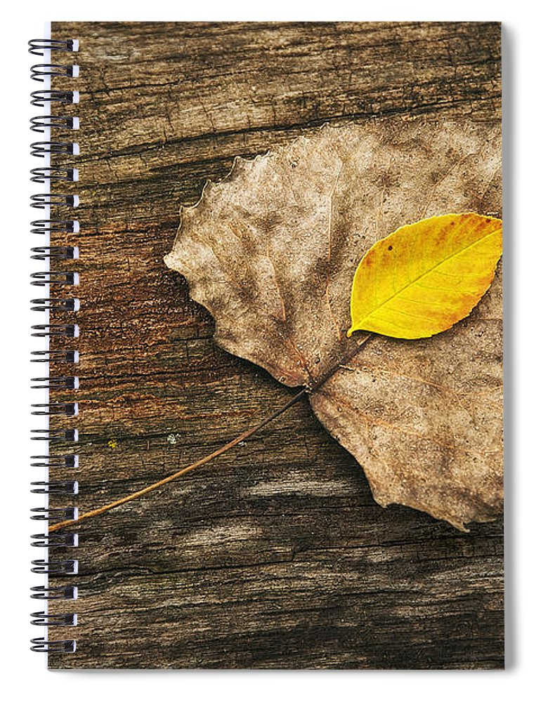 Leaf Spiral Notebook featuring the photograph Two Leaves by Scott Norris