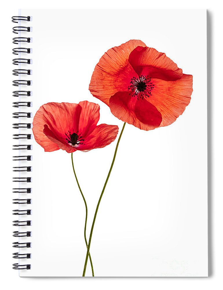 Two poppy flowers spiral notebook for sale by elena elisseeva poppy spiral notebook featuring the photograph two poppy flowers by elena elisseeva mightylinksfo