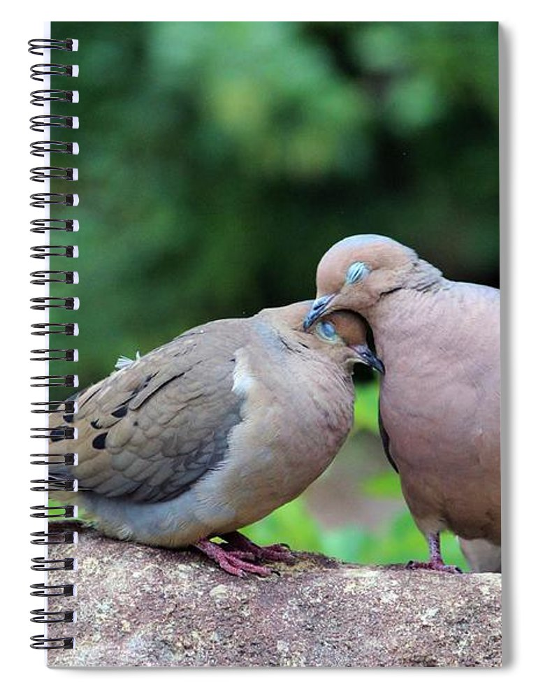 Doves For Sale >> Two Turtle Doves Spiral Notebook For Sale By Cynthia Guinn
