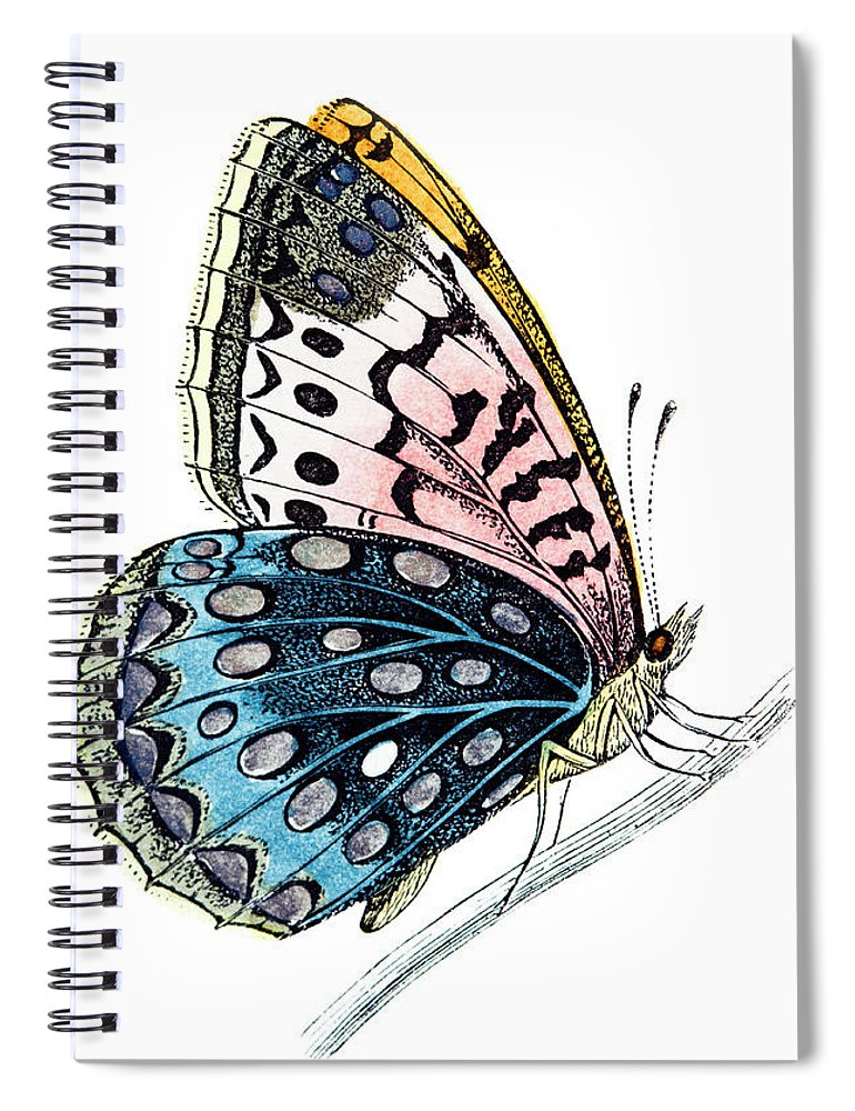 Engraving Spiral Notebook featuring the digital art Venus Fritillary Butterfly by Andrew howe