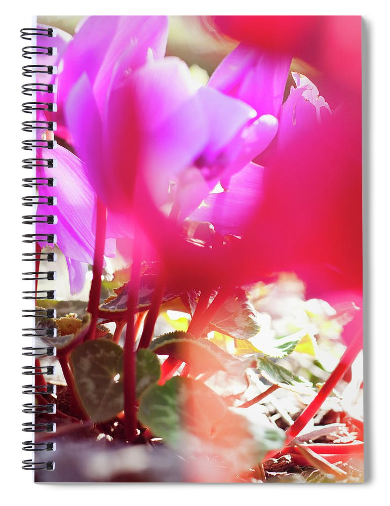 Shadow Spiral Notebook featuring the photograph Vibrant Magenta Cyclamen In Bloom by Erika Pino