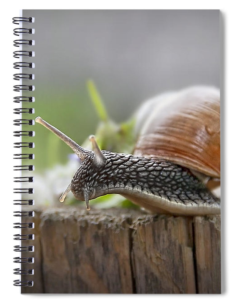 Alone Spiral Notebook featuring the photograph Voyage Of Discovery by Evelina Kremsdorf