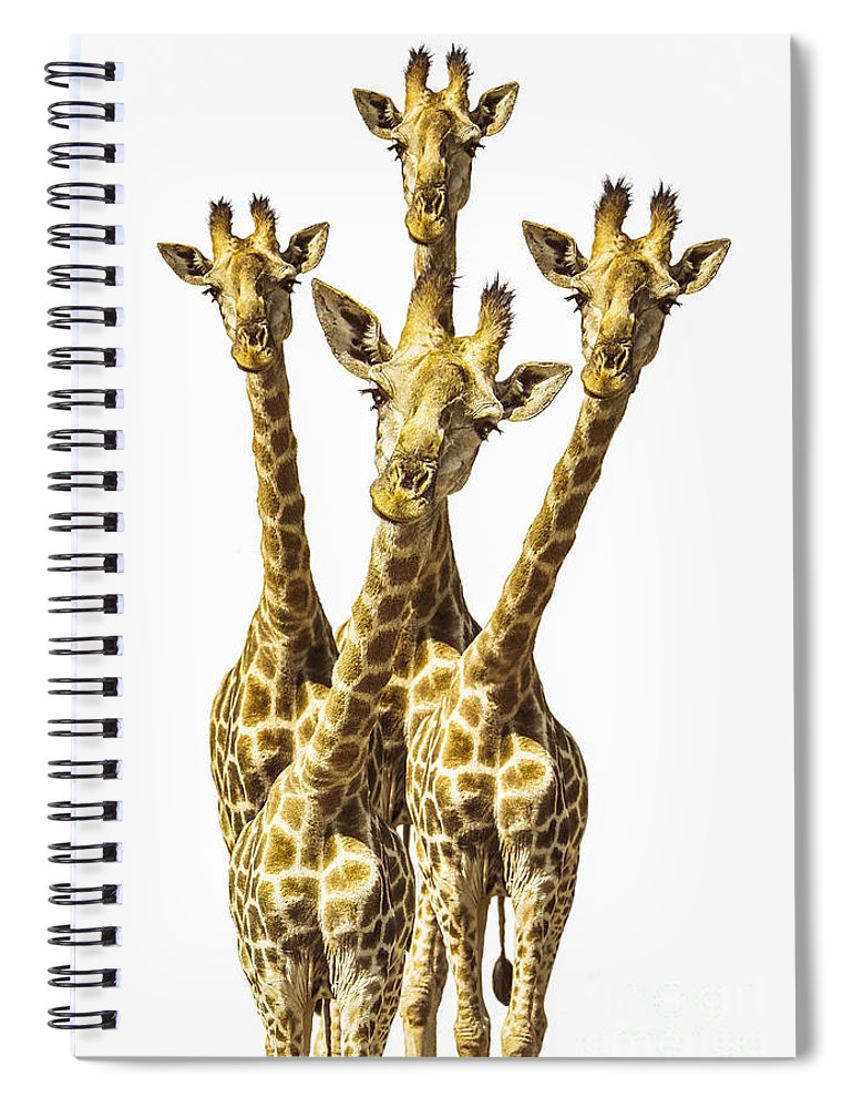 Giraffe Spiral Notebook featuring the photograph What are YOU looking at? by Diane Diederich