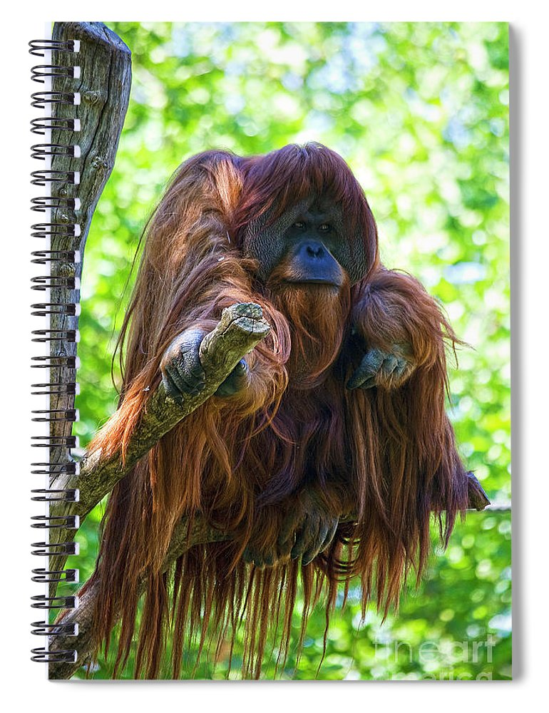 Orang Untang Spiral Notebook featuring the photograph What's Up by Heiko Koehrer-Wagner