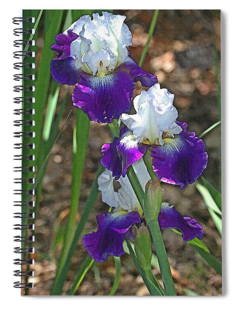 White And Blue Iris Stalks At Boyce Thompson Arboretum Spiral Notebook
