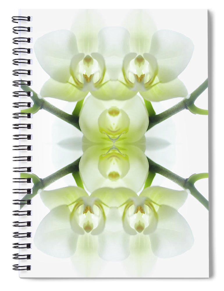 Tranquility Spiral Notebook featuring the photograph White Orchid With Stems by Silvia Otte