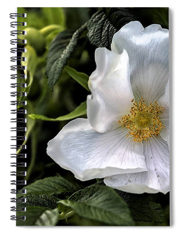 Rose Spiral Notebook featuring the photograph White Rose by Belinda Greb