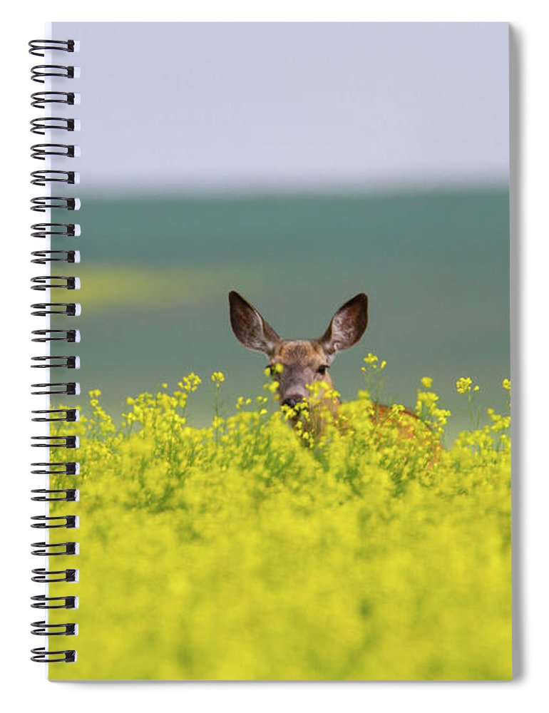Alertness Spiral Notebook featuring the photograph White-tailed Doe by Ed Matuod