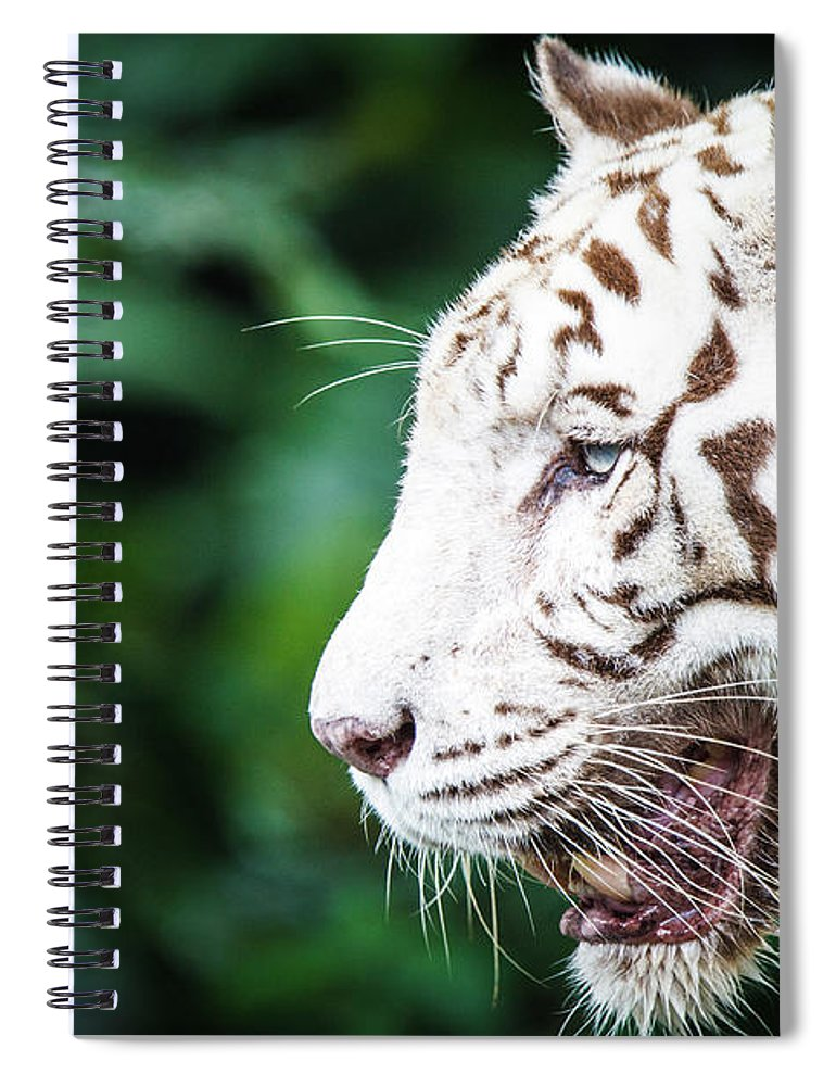 Snarling Spiral Notebook featuring the photograph White Tiger by Tony Kh Lim