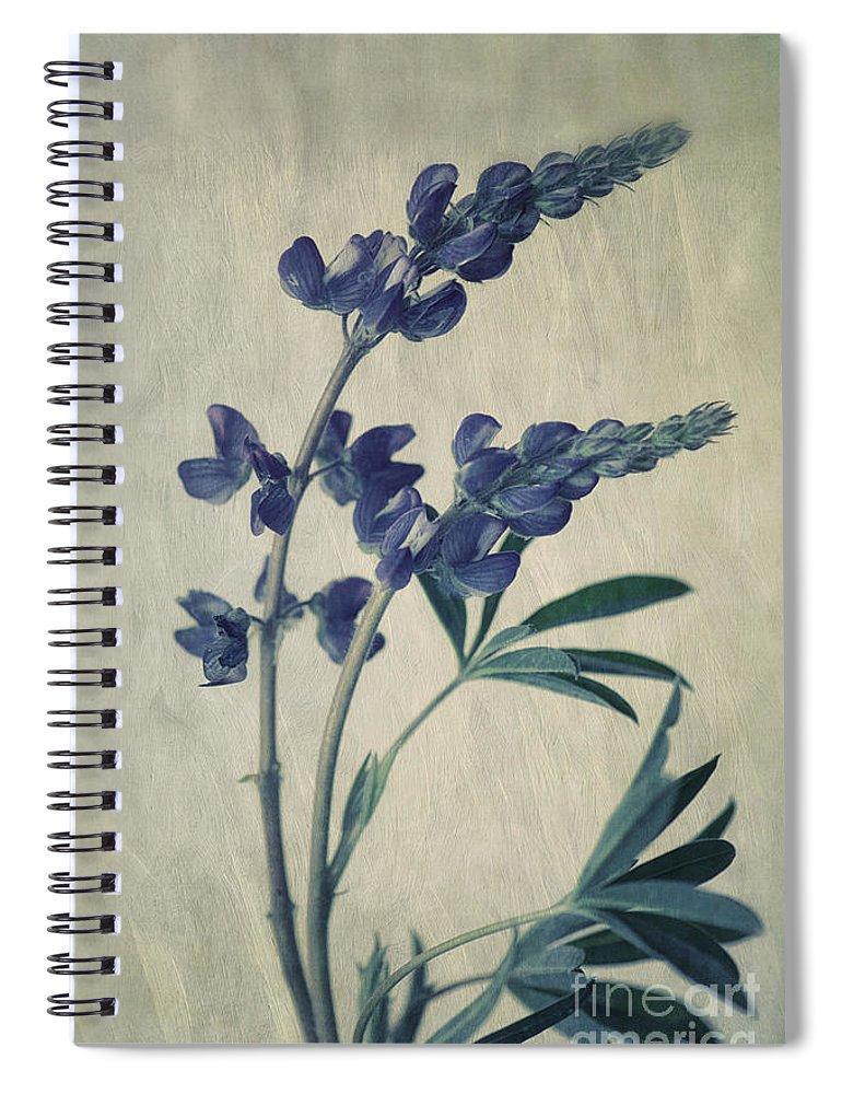 Lupine Spiral Notebook featuring the photograph Wild Lupine by Priska Wettstein