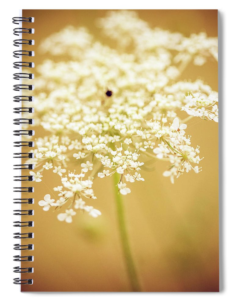Creativity Spiral Notebook featuring the photograph Wildflower by Jeja