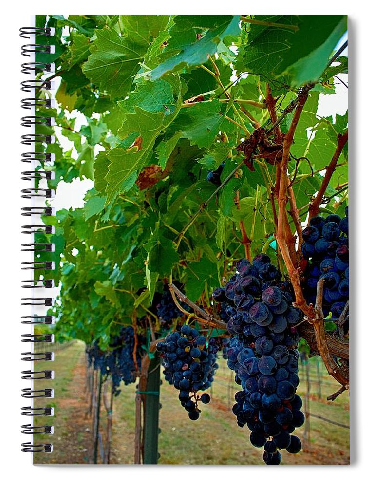 Winery Print Spiral Notebook featuring the photograph Wine Grapes On The Vine by Kristina Deane
