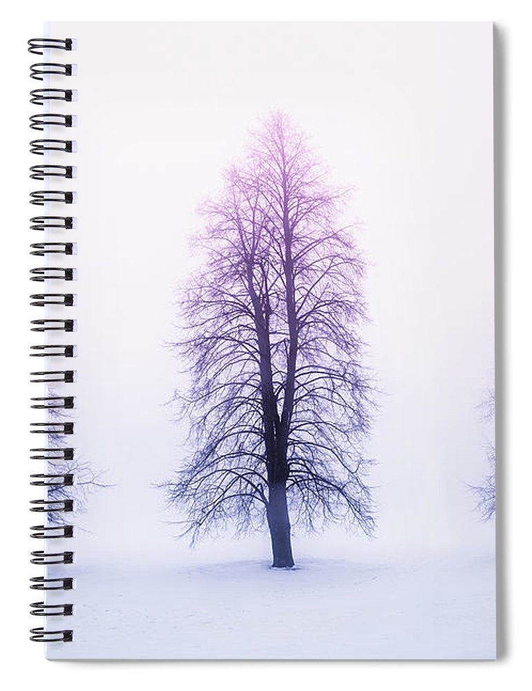 Trees Spiral Notebook featuring the photograph Winter Trees In Fog At Sunrise by Elena Elisseeva