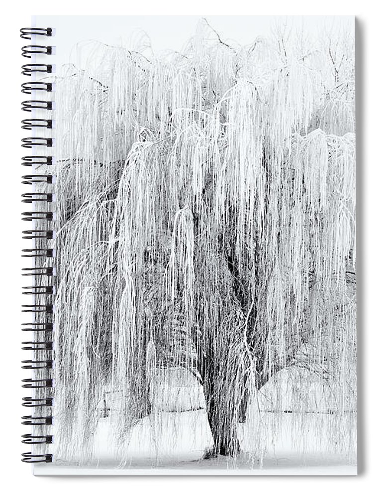 Willow Spiral Notebook featuring the photograph Winter Willow by Mike Dawson