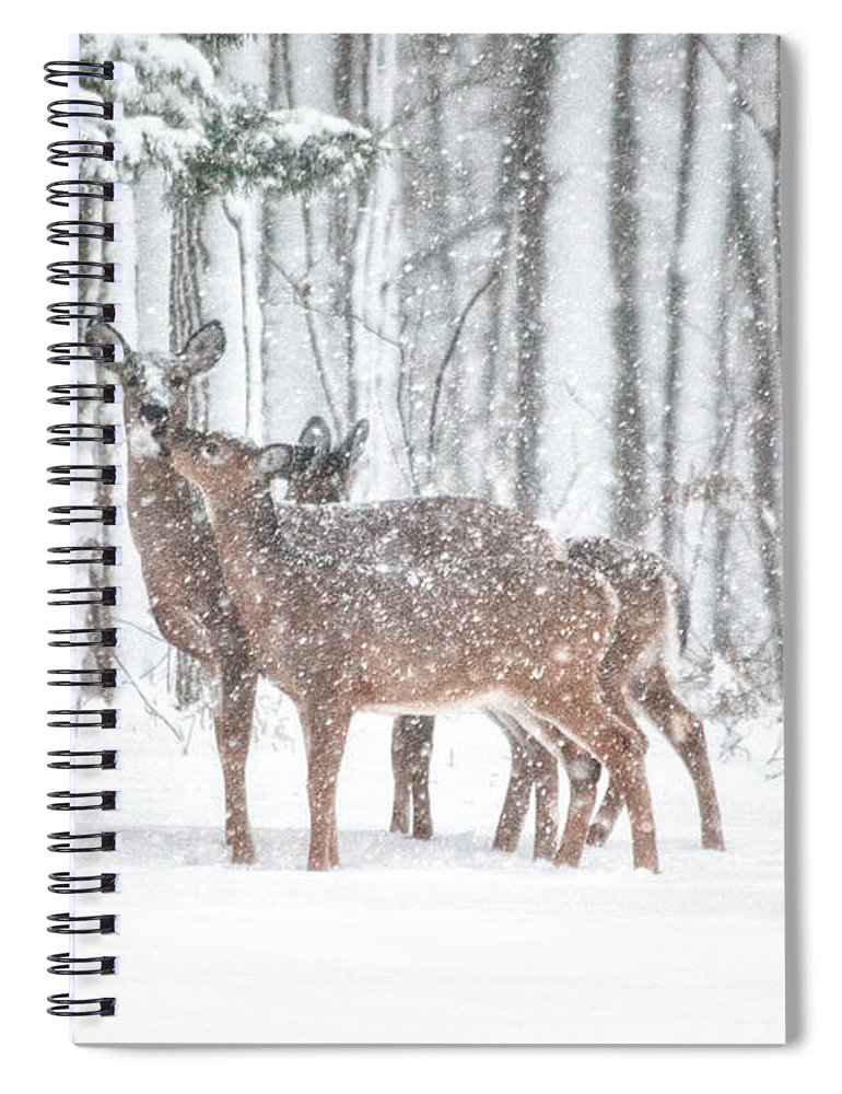 Deer Spiral Notebook featuring the photograph Winters Love by Karol Livote