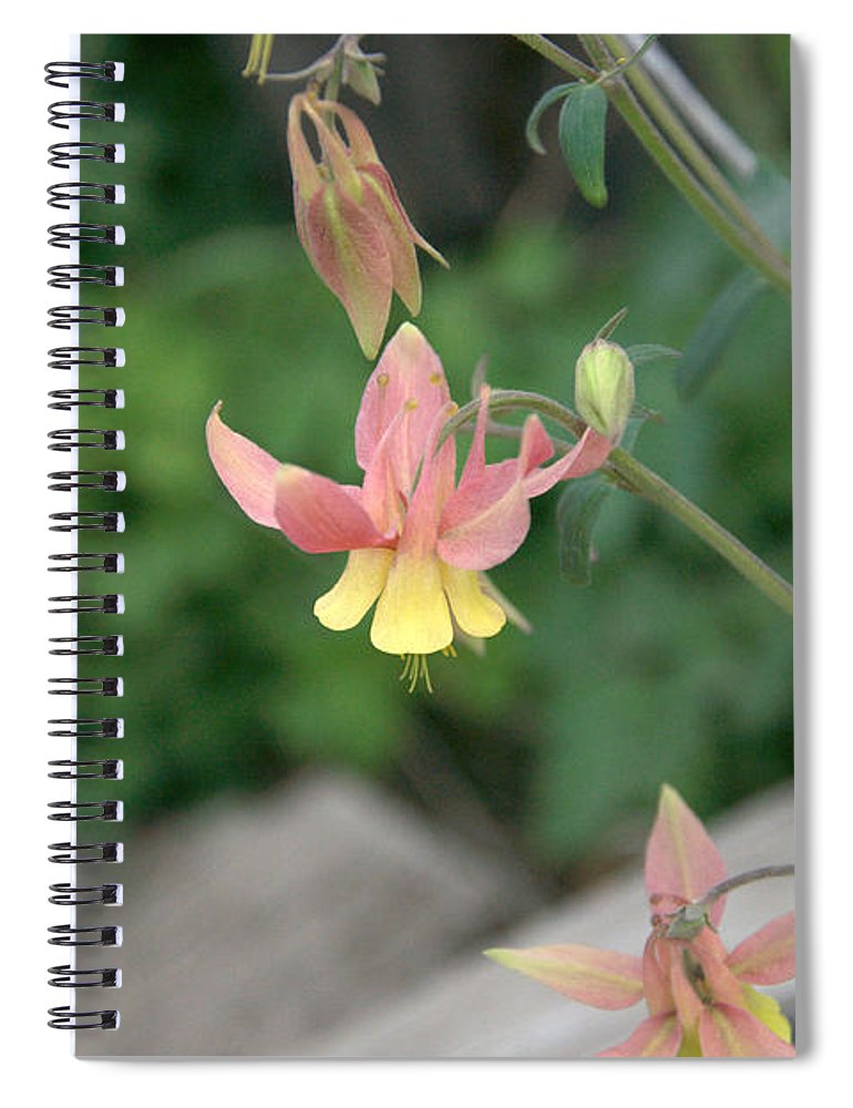 Yellow Spiral Notebook featuring the photograph Yellow Columbine 2 by Frank Madia