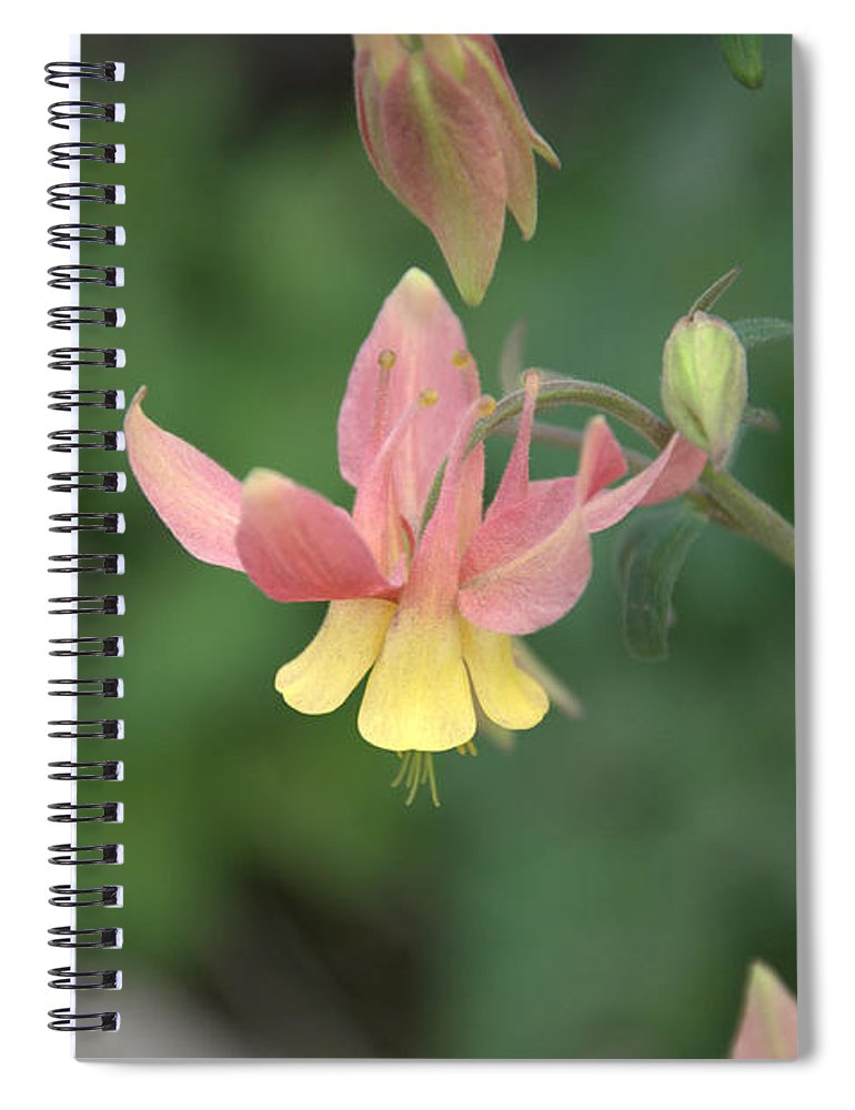 Flower Spiral Notebook featuring the photograph Yellow Columbine by Frank Madia