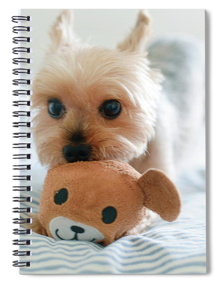 Pets Spiral Notebook featuring the photograph Yorkie Playing With Teddy Toy by Cheryl Chan