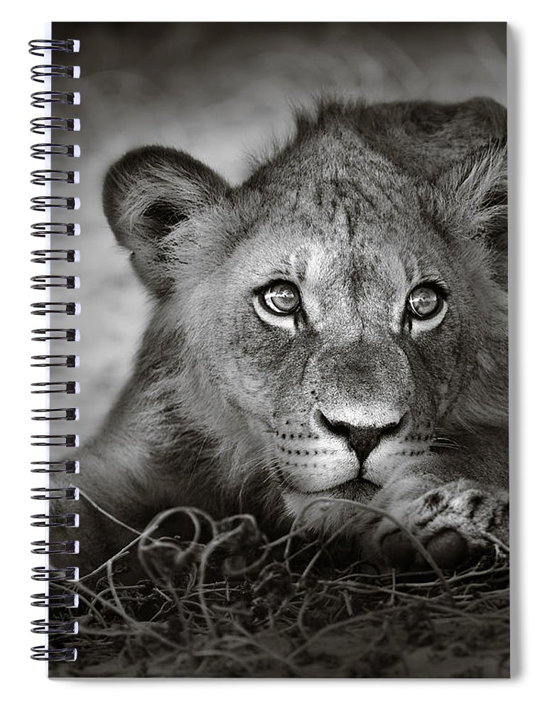 Wild Spiral Notebook featuring the photograph Young Lion Portrait by Johan Swanepoel