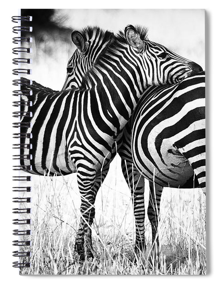 3scape Spiral Notebook featuring the photograph Zebra Love by Adam Romanowicz