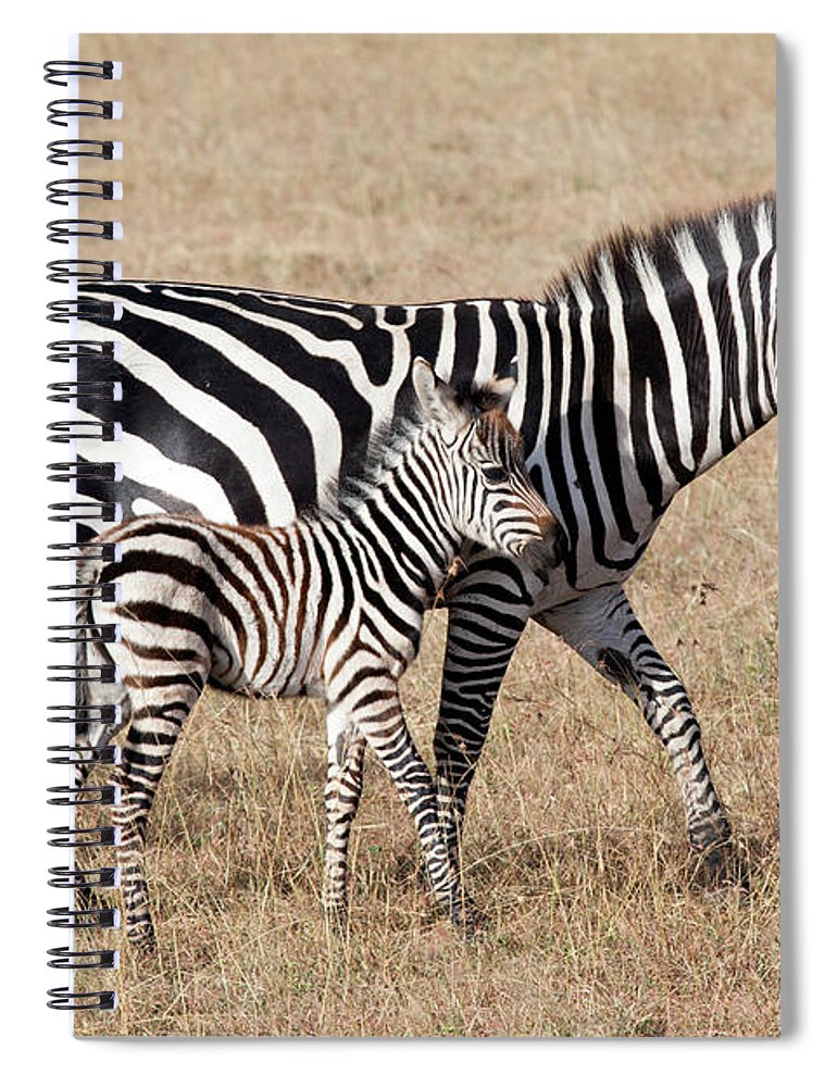 Kenya Spiral Notebook featuring the photograph Zebra With Young Foal, Masai Mara by Angelika
