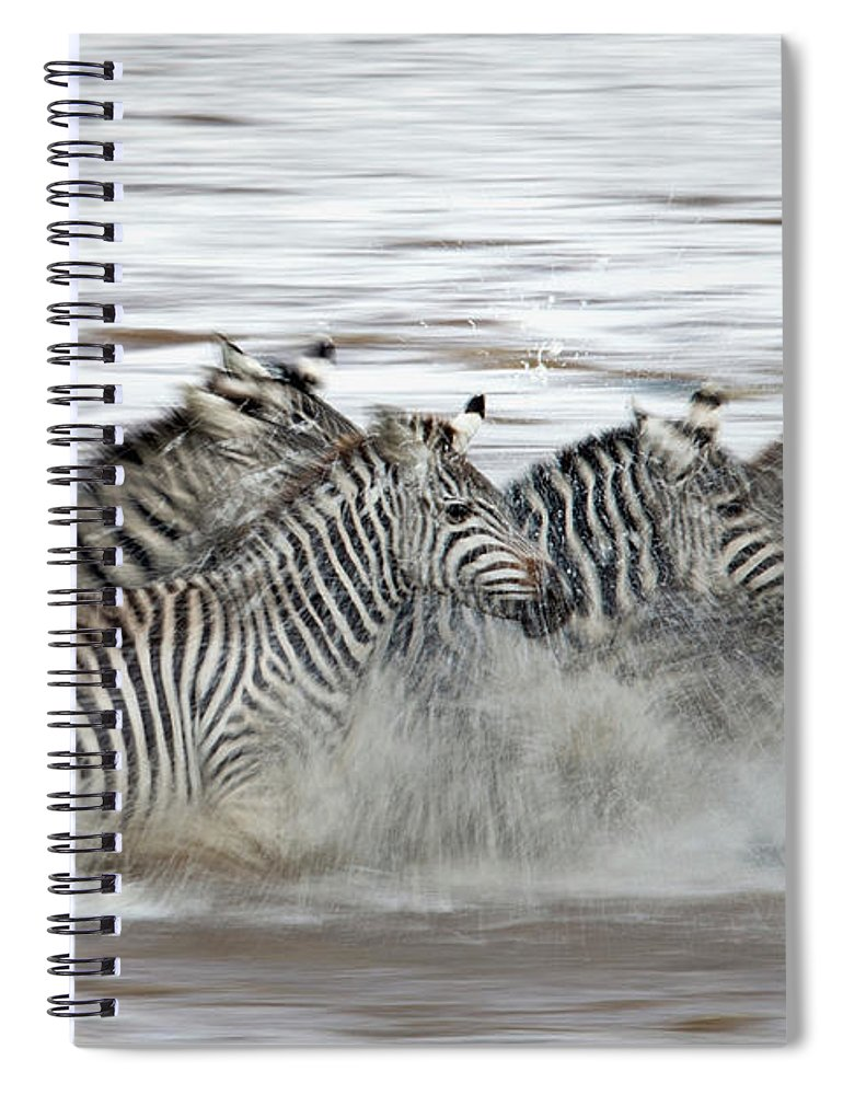 Plains Zebra Spiral Notebook featuring the photograph Zebras Crossing The Mara River by Aditya Singh