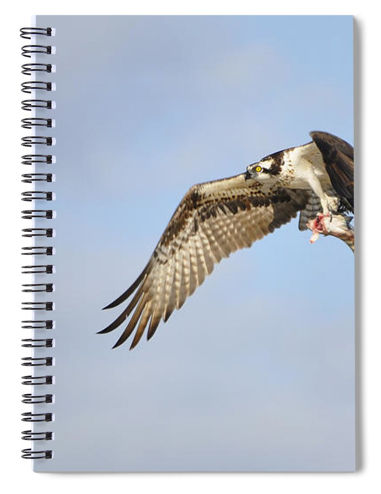 Osprey Spiral Notebook featuring the photograph Osprey Lunch To Go I by Christine Stonebridge