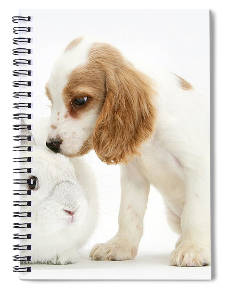 Nature Spiral Notebook featuring the photograph Cocker Spaniel And Rabbit by Mark Taylor