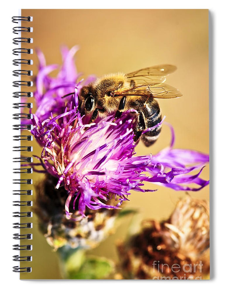 Honey Spiral Notebook featuring the photograph Honey bee by Elena Elisseeva