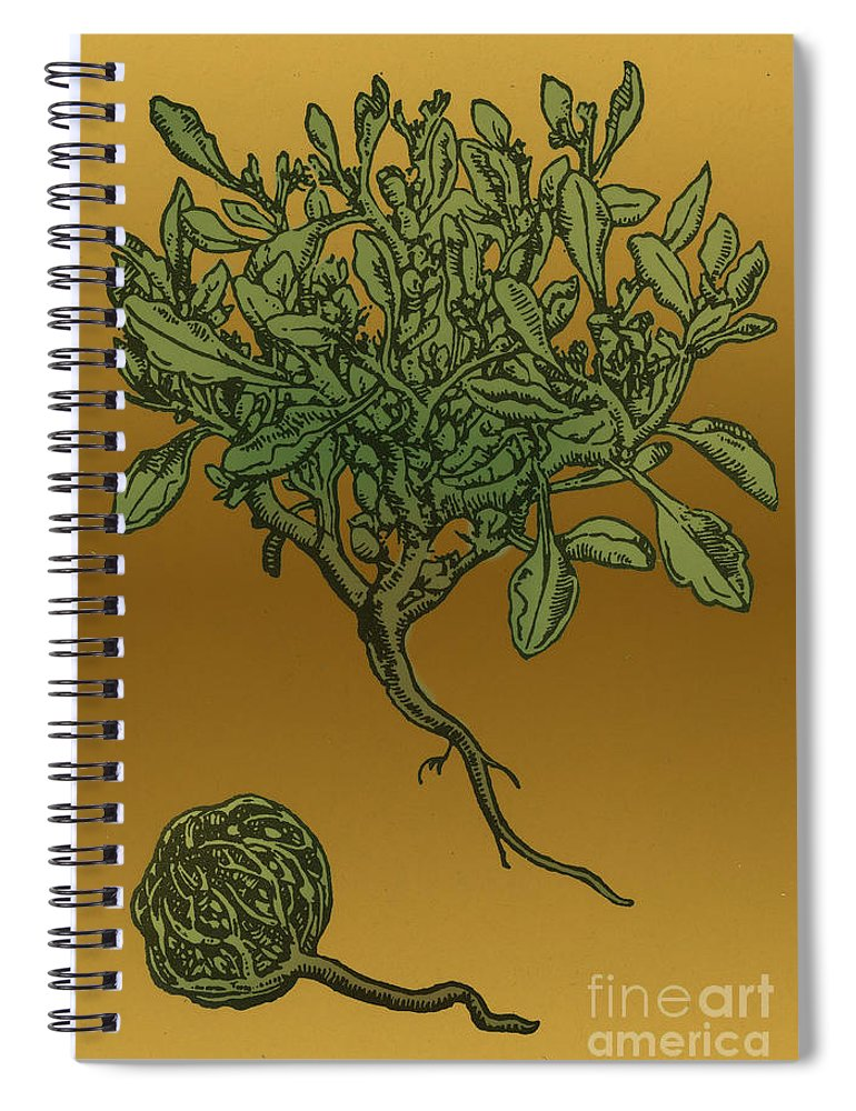 Science Spiral Notebook featuring the photograph Anastatica Hierochuntica, Resurrection by Science Source